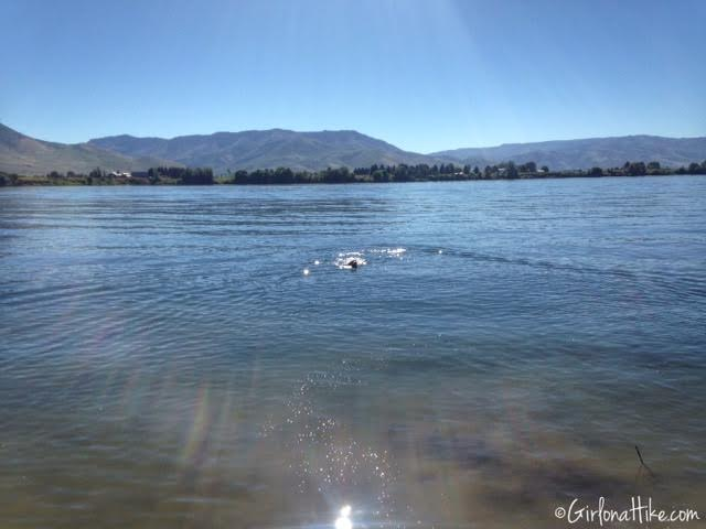 Dogs at Pineview Reservoir