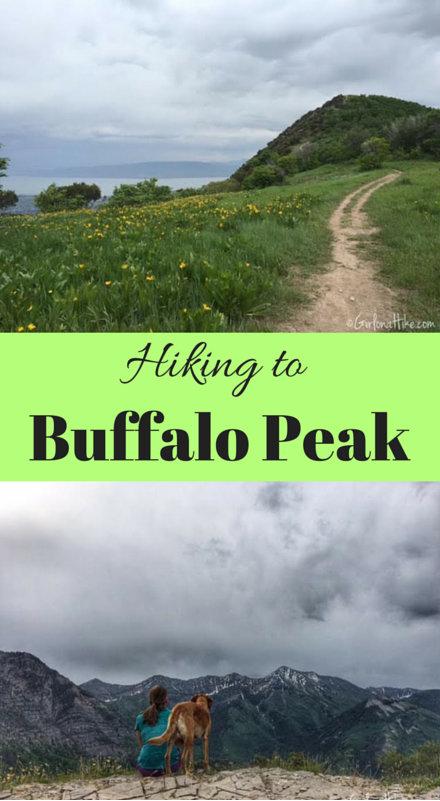 Buffalo Peak, Utah, Hiking in Utah with Dogs