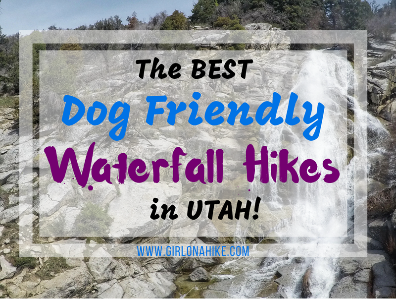 The Best Dog Friendly Waterfall Hikes in Utah!