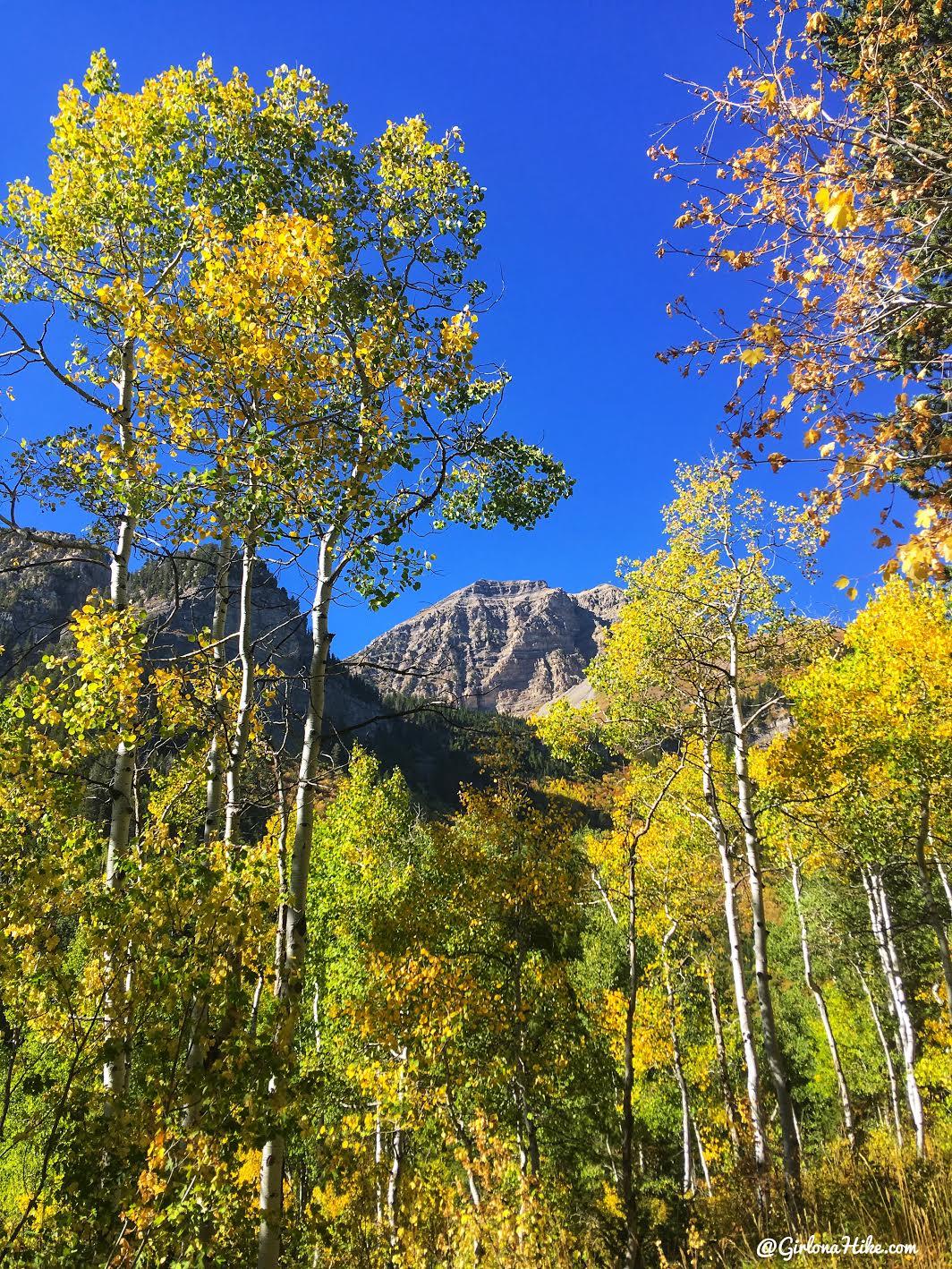Hiking to Julie Andrews Meadow, American Fork Canyon, Utah, Hiking in Utah with Dogs