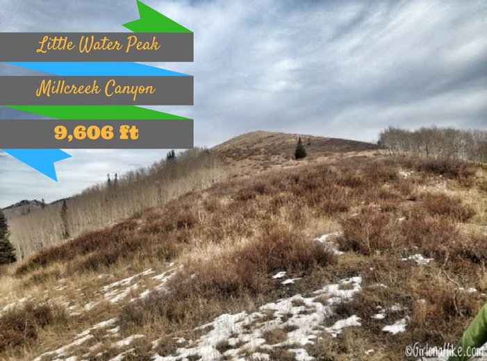 Hiking to Little Water Peak, Millcreek Canyon, Hiking in Utah with Dogs