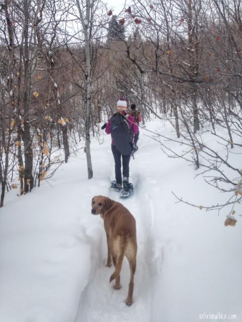 Hiking the Moose Hollow Trail, Jeremy Ranch, Kimball Junction, Utah, Hiking in Utah with Dogs, Hiking in Park City, Utah