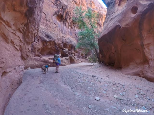 Backpacking Little Death Hollow/Wolverine Loop, Escalante, Utah,