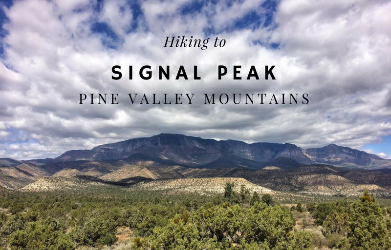 Hiking to Signal Peak, Pine Valley Mountains, Washington County High Point