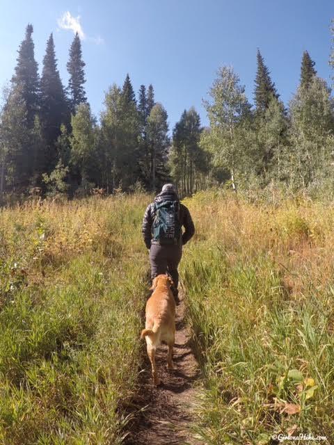 Hiking the Horse Flat Trail, American Fork Canyon