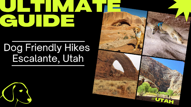 The Ultimate Guide - Dog Friendly Hikes in Escalante, Utah!