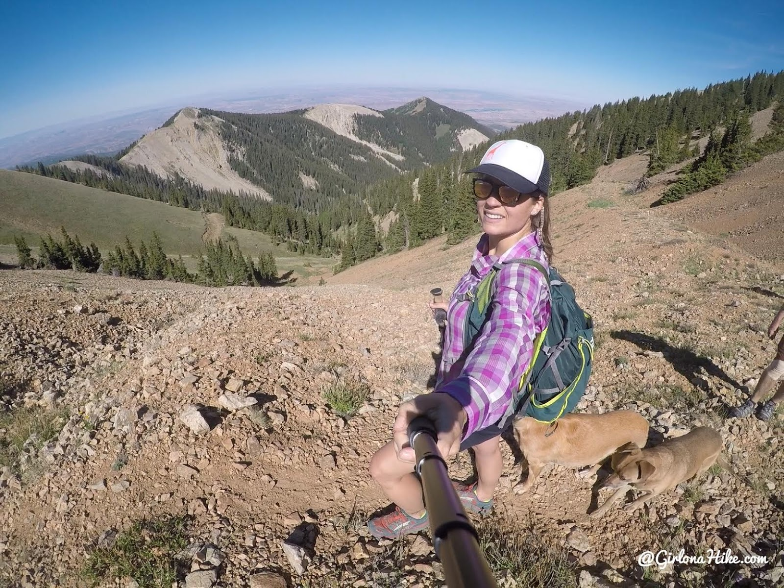 Hiking to Mt. Waas, LaSal Mountains, Grand County High Point, Hiking in Utah with Dogs