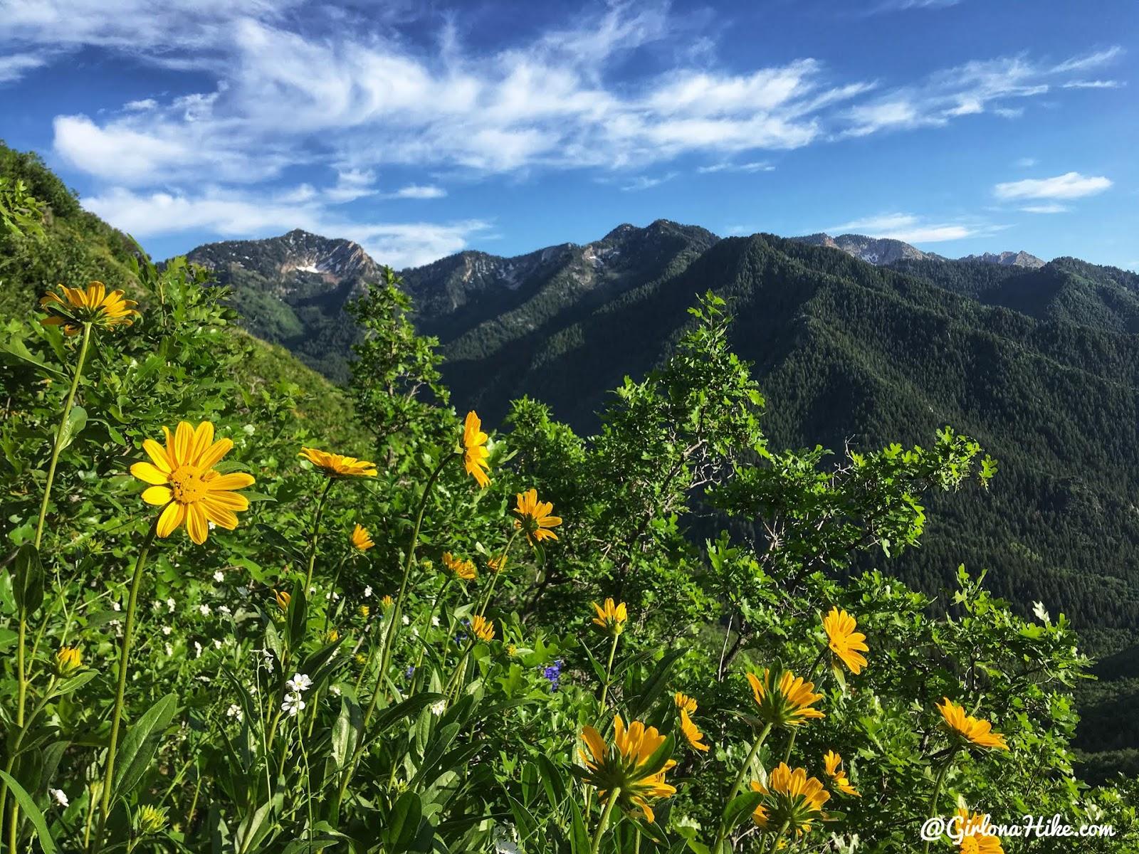 Hiking to Church Fork Peak, Milcreek Canyon