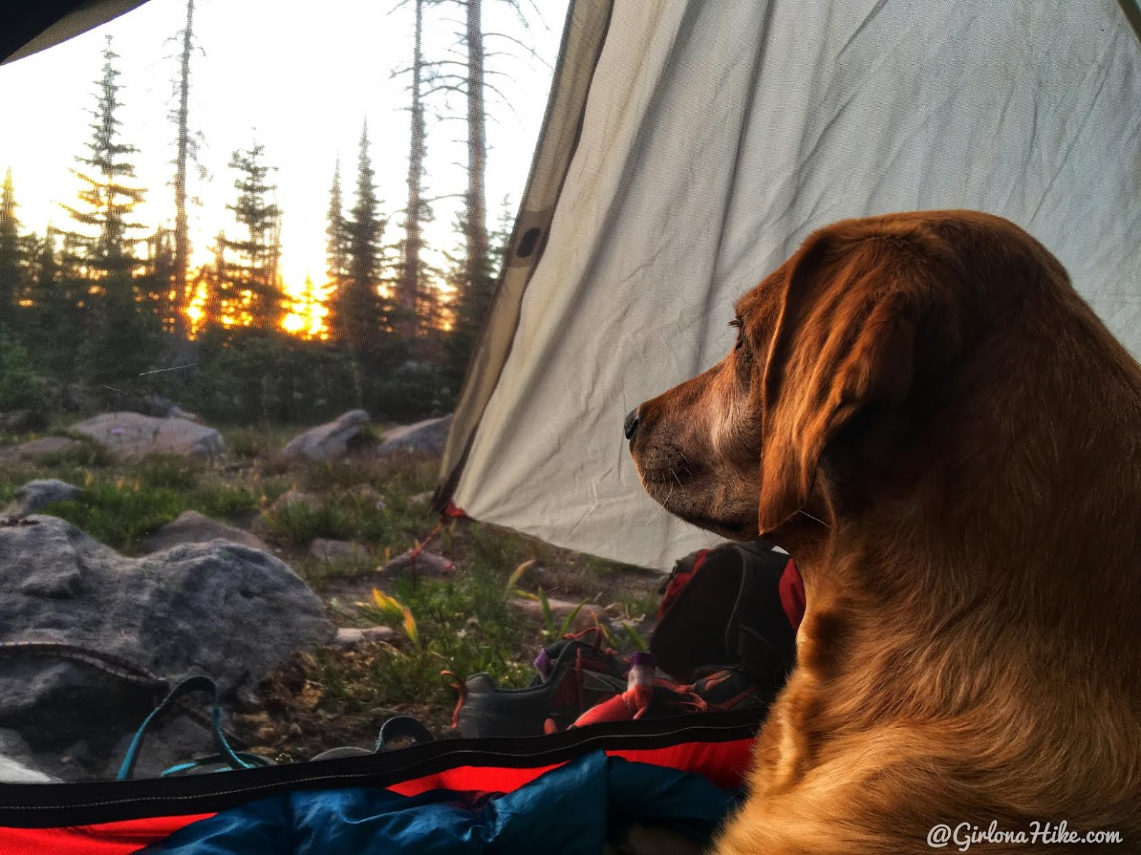 Backpacking the Shingle Creek Trail, Uintas, MSR Freelite 2 with dogs