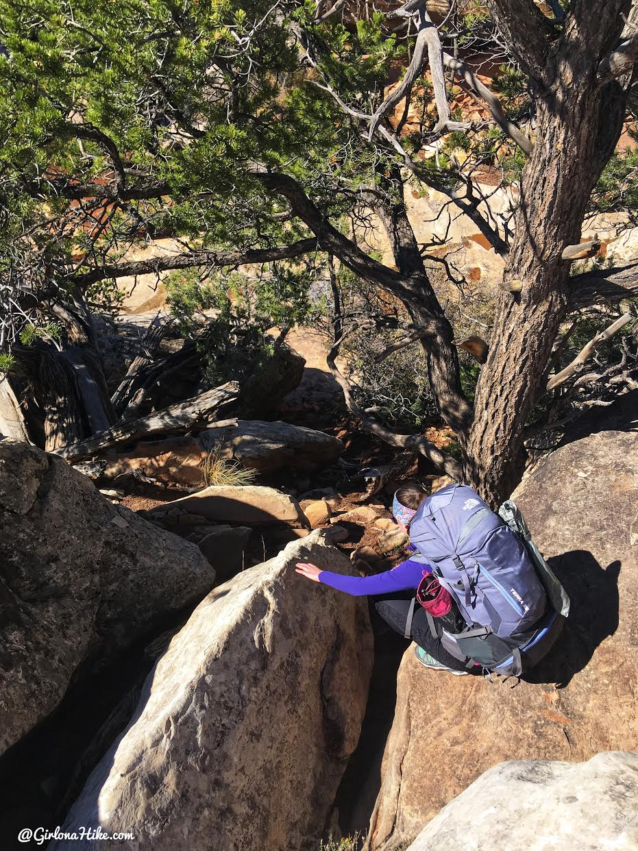 Backpacking Fish & Owl Canyons, Cedar Mesa & Bears Ears National Monument