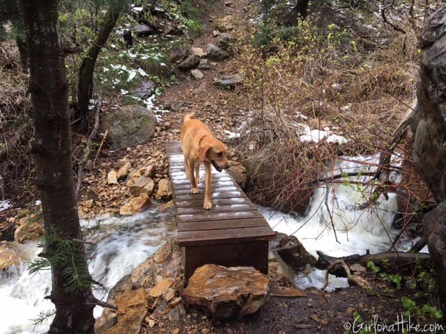 Heugh's Canyon Waterfall, Utah, Hiking in Utah with Dogs