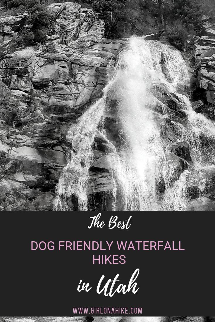 The Best Dog Friendly Waterfalls Hikes in Utah