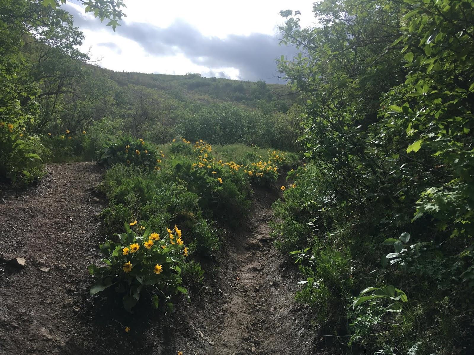 Hiking to Mt. Wire, Salt Lake City, Utah, Hiking in Utah with Dogs