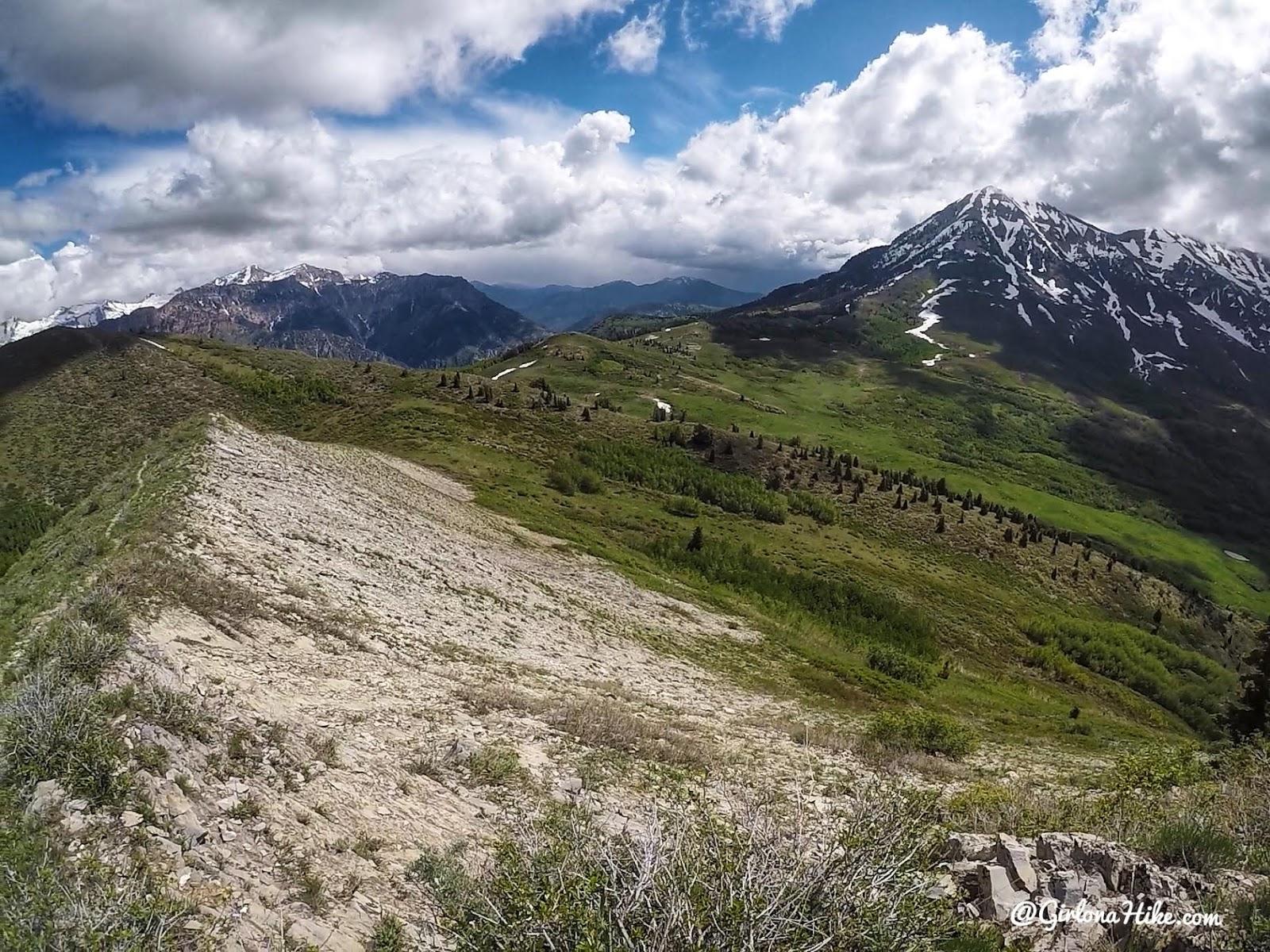 Hiking Mahogany Mountain, Utah county, utah peak baggers, hiking in utah with dogs, Utah's best peaks