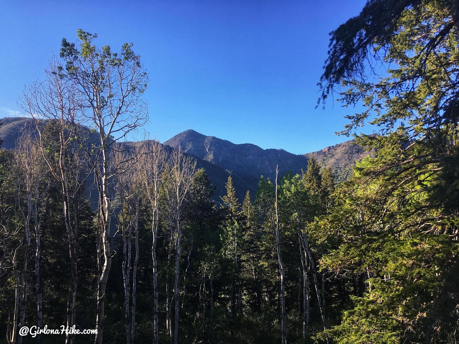Hiking the Terraces Trail, Millcreek Canyon, Hiking in Utah with Dogs, Hiking in Millcreek Canyon