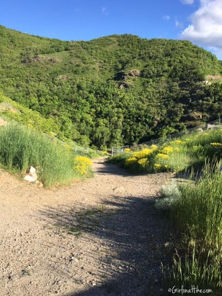 Holbrook Canyon Trail, Bountiful, Utah, Hiking in Utah with Dogs