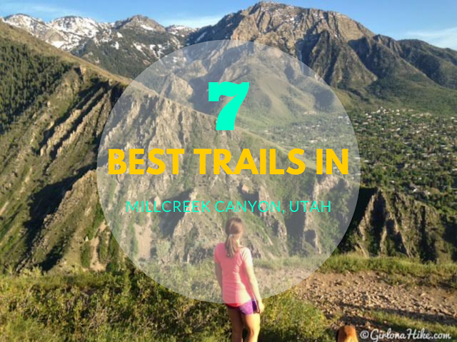 The 7 Best Trails in Millcreek Canyon, Best hiking in Utah, hiking in utah with dogs