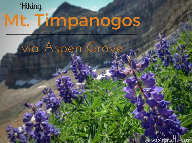 Top 10 Peaks to Bag in Salt Lake City, Mt.Timpanogos Aspen Grove