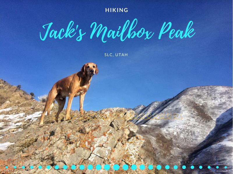 Hiking to Jack's Mailbox Peak, Utah, Hiking in Utah with Dogs