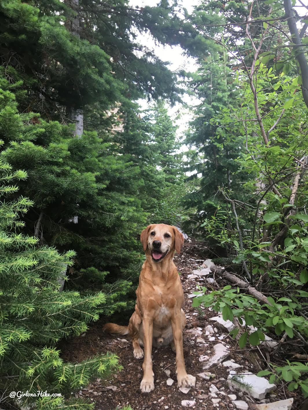 Hiking to Bull Mountain, Box Elder County High Point