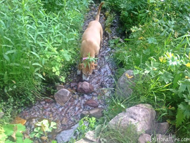 Hiking to Murdock Peak, Hiking in Utah with Dogs