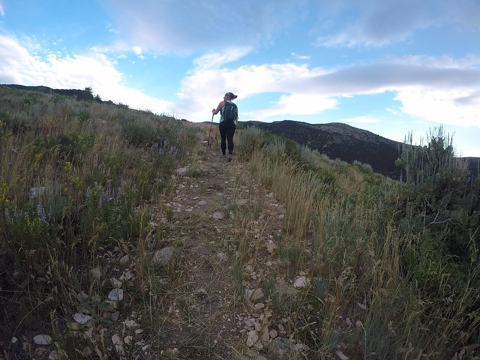 Hiking to Bull Mountain via Bull Flat, Box Elder County High Point