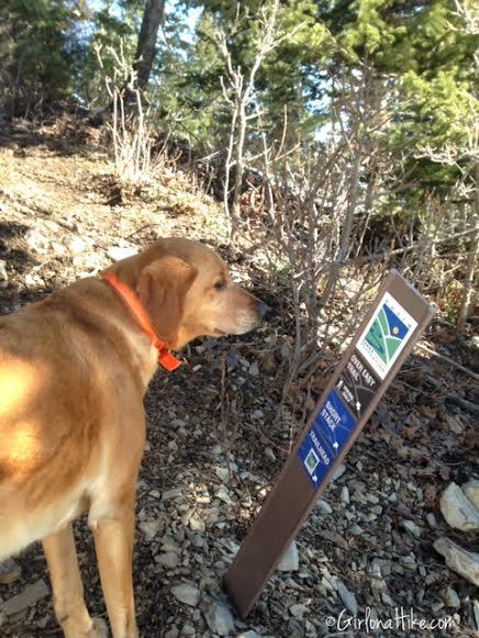 Hiking to Summit Park Peak, Utah, Point 8618, Hiking in Utah with Dogs