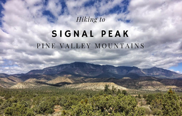 Hiking to Signal Peak, Pine Valley Mountains, The BEST Hikes in St.George, Utah!