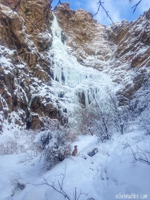 Hiking Waterfall Canyon in Ogden, Utah, Hiking in Utah with Dogs, Frozen Waterfalls in Utah
