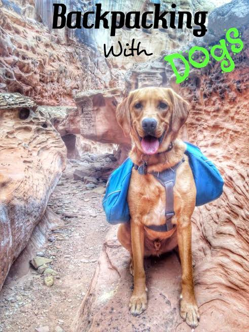 Backpacking with Dogs, Hiking in Utah with Dogs