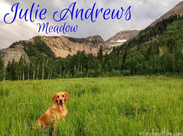 The Top 10 Hikes in American Fork Canyon, American fork canyon best hikes and trails, best views in American fork canyon, Julie Andrews Meadow