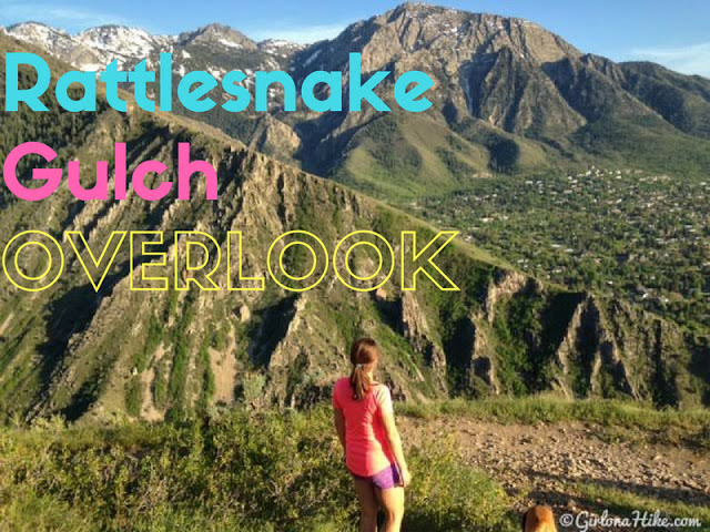 The 7 Best Trails in Millcreek Canyon, Rattlesnake Gulch Trail Utah, Hiking in Utah with dogs