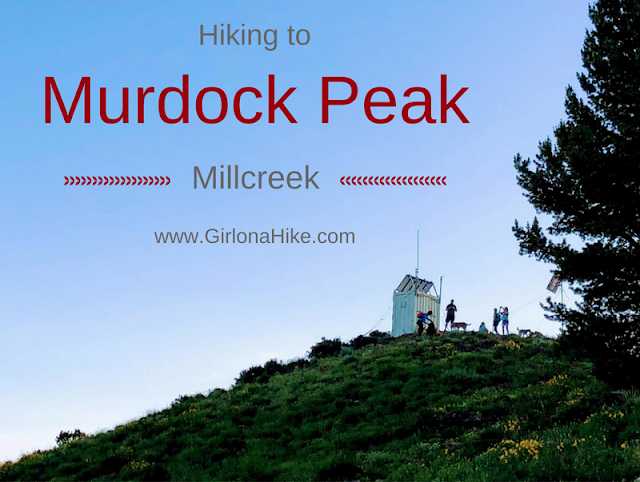 The 7 Best Trails in Millcreek Canyon, Hiking in Utah with Dogs, Murdock Peak