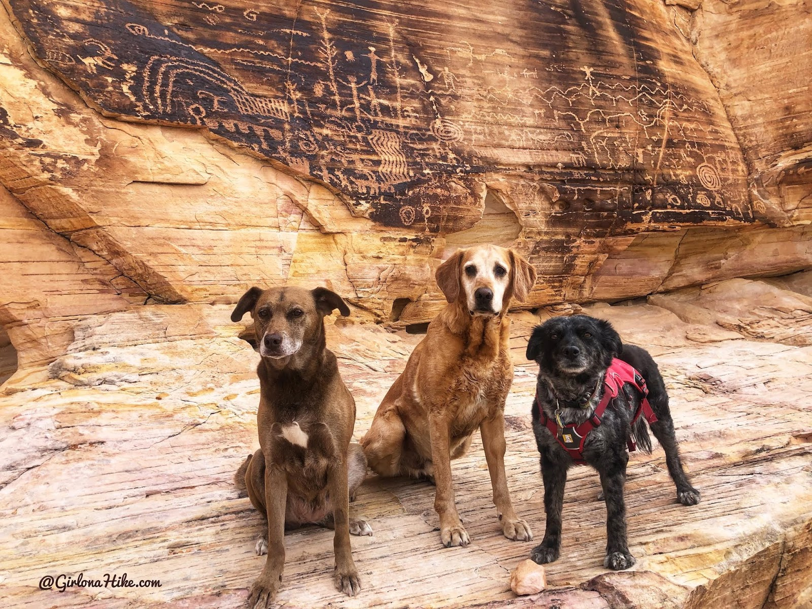 Hiking at Gold Butte National Monument, Hiking in Nevada with Dogs, hiking outside las vegas