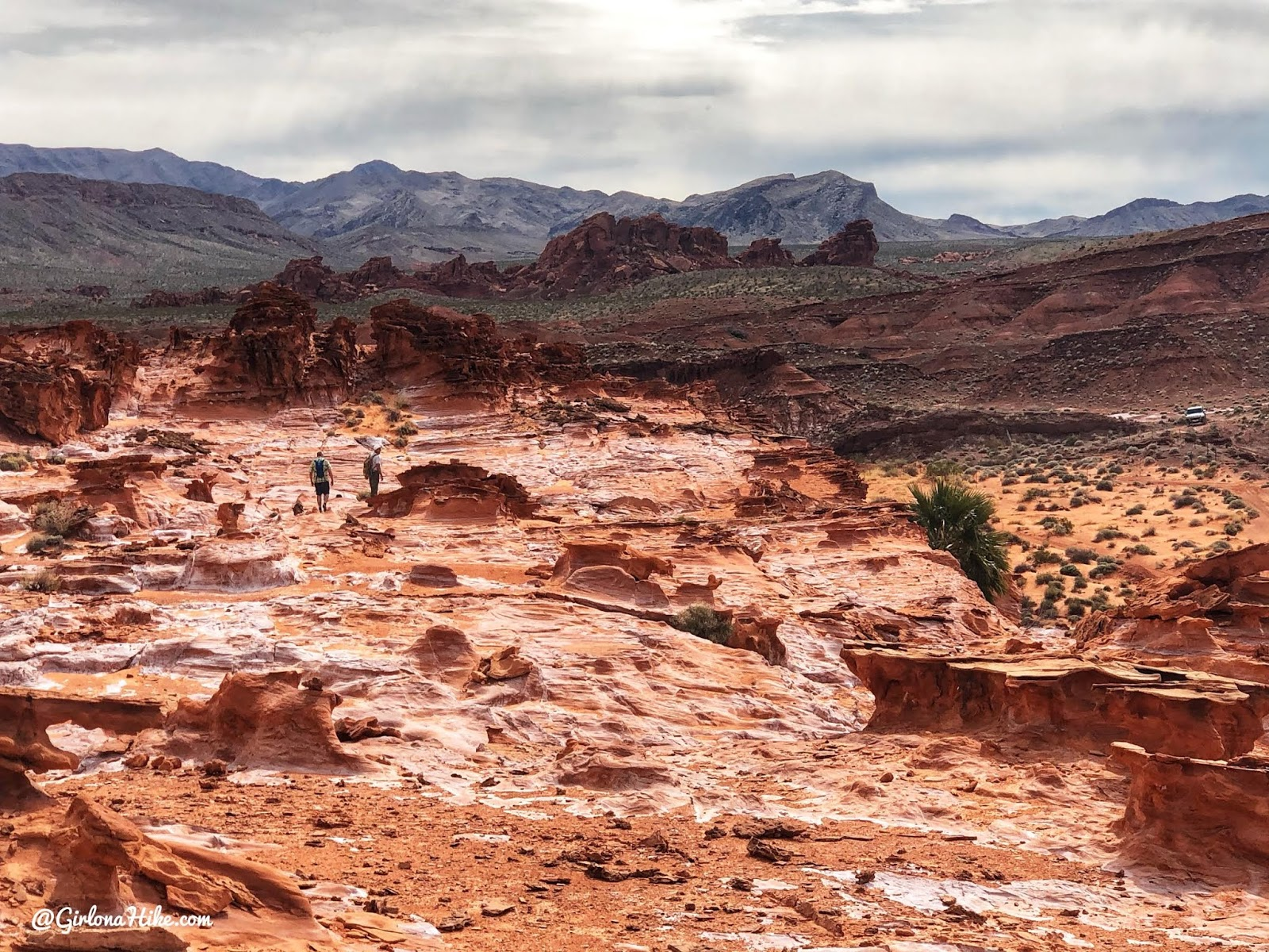 Hiking at Gold Butte National Monument, Hiking in Nevada with Dogs, hiking outside las vegas, little finland