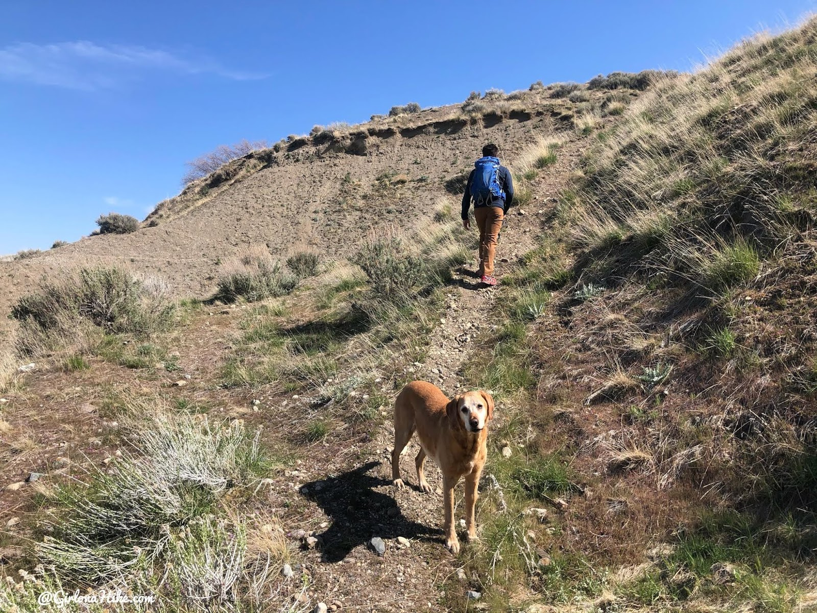 Hiking to the Willard Fin, Hiking in Willard, Utah, hiking in utah with dogs