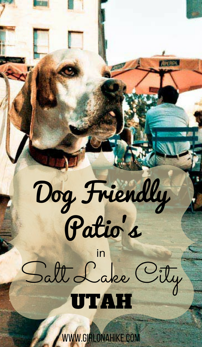 Dog Friendly Restaurant Patios in Salt Lake City