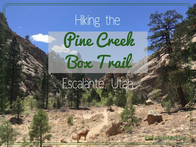 The Ultimate Guide - Dog Friendly Hikes in Escalante, Utah! Hike the Pine Creek Box Trail