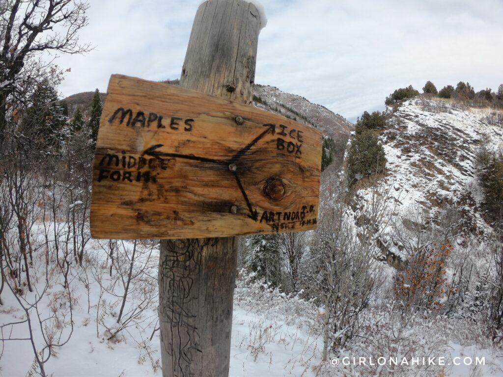 Hiking Icebox Canyon via Wheeler Creek