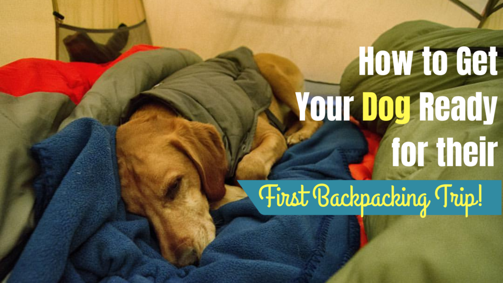 How to Get your Dog Ready for Their First Backpacking Trip!