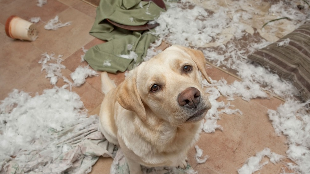 Does Homeowners Insurance Cover Damage Caused by Pets?
