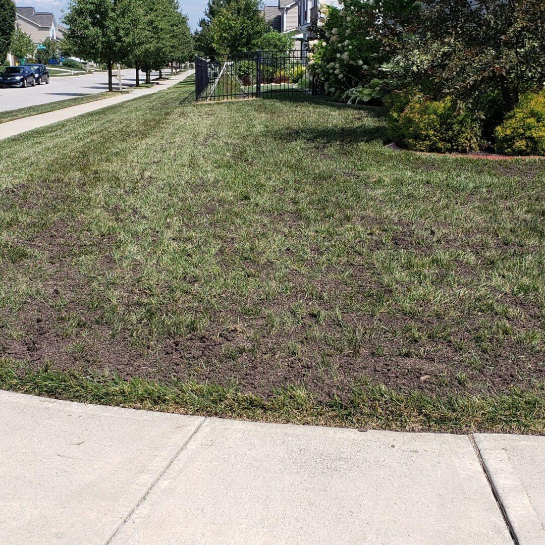 before lawn rejuvenation august 15 2020
