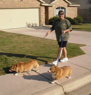 Murphy walking dogs