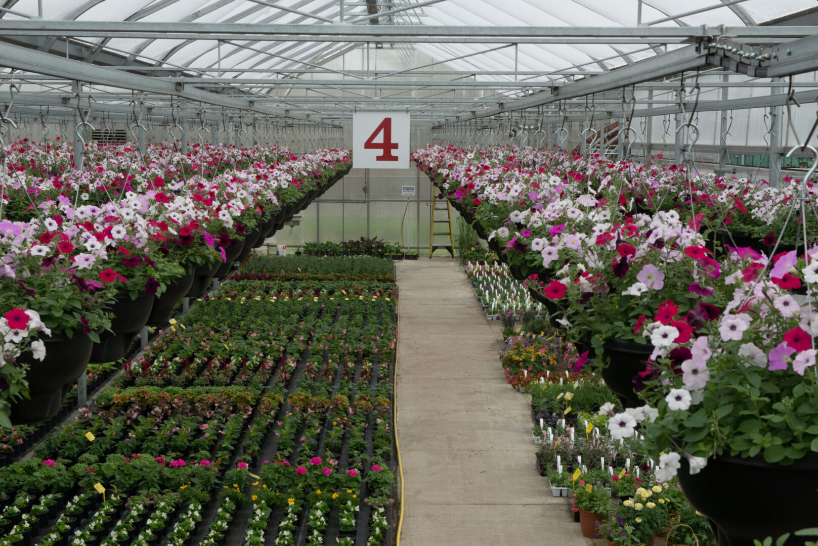 greenhouse#1