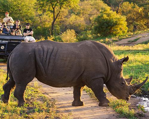 south africa safari group trip