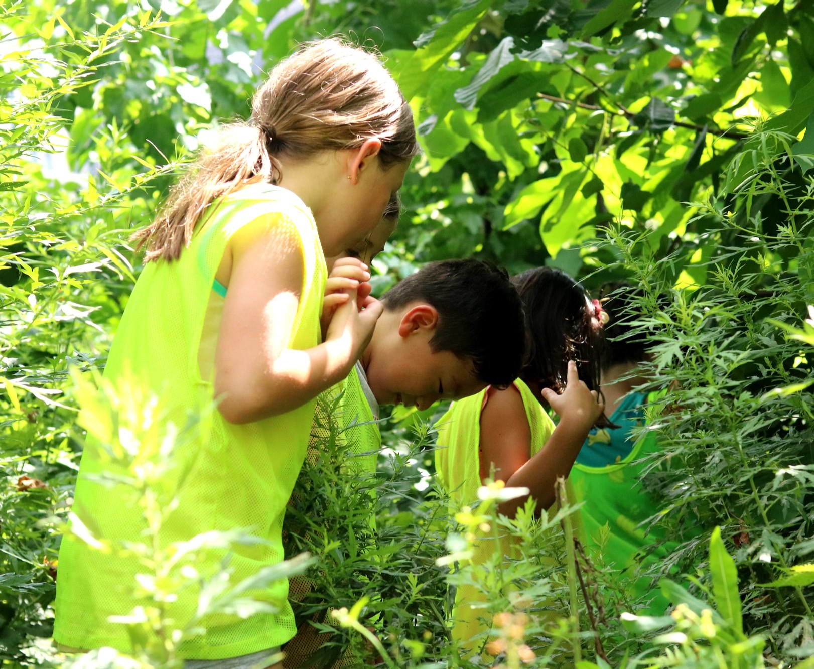 Treebath Takes Learning to the Great Outdoors This Fall