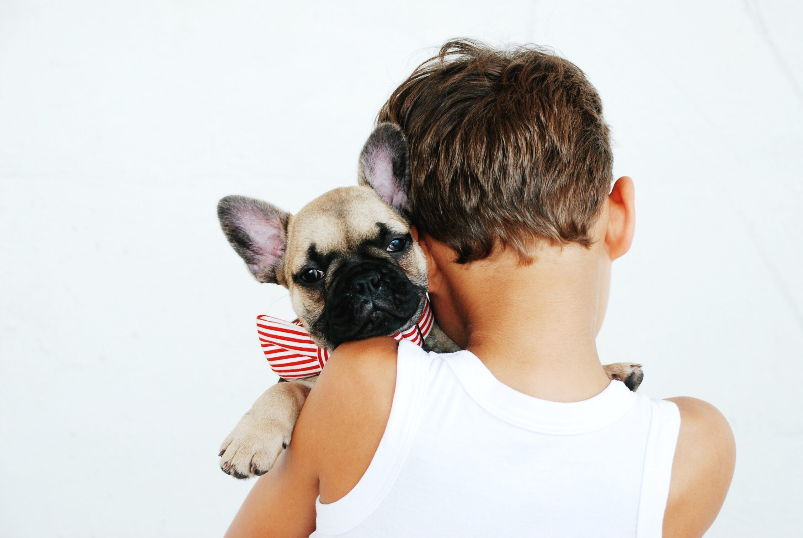 Considerations Before Getting a Pet for Your Kids