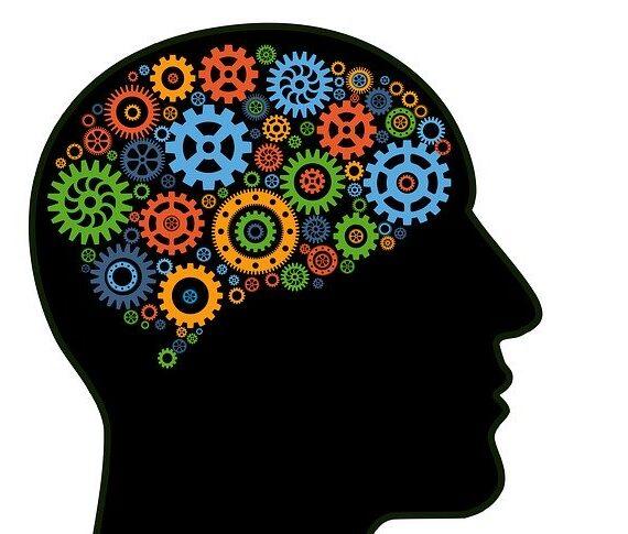 human brain mechanism