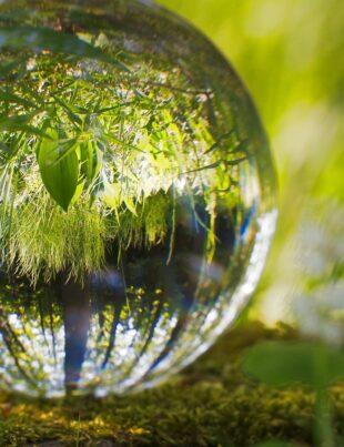 Reflecting and Inverting Human Perception of Nature