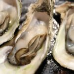 Oysters on the Half-Shell